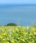 Ameztoi vineyards