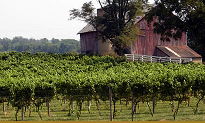 Corcoran Vineyards