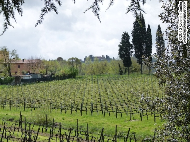 The lovely vineyards at Pietro Beconcini.