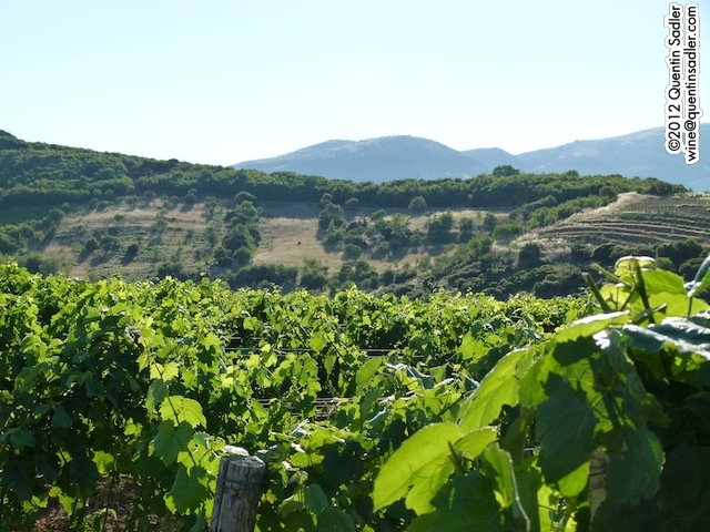 Rapsani Vineyards