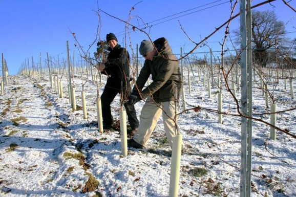 Pruning at Stopham - photo by kind permission