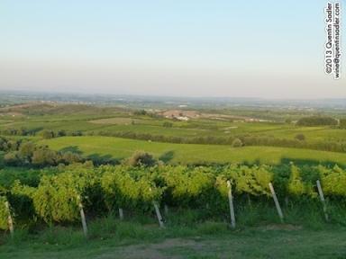 Naoussa vineyards.
