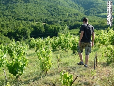 Kostis Dalamaras amongst his vines.