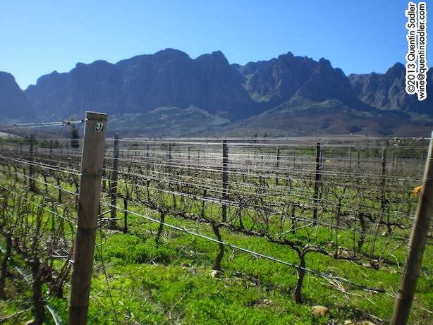 The dramatic landscape of Stellenbosch at Kleine Zalze Vineyards.
