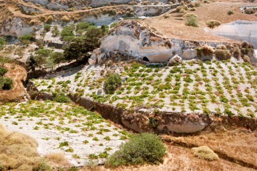 Santorini's wild rocky terrain showing the low trained vines in the terraced vineyards or 'pezoules'.