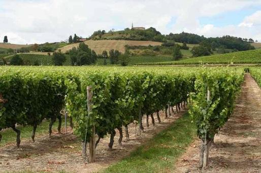 Vineyards at Château Clément Termes - photo courtesy of Château Clément Termes.