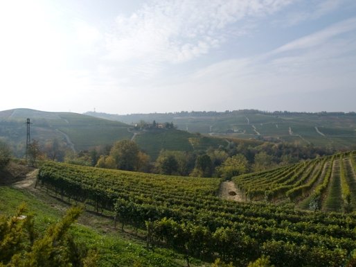 The beautiful rolling hills of Piedmont - photo courtesy of Made by