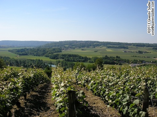 The vineyards of Champagne.