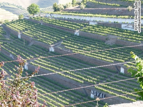 Large terraces at Quinta do Noval.