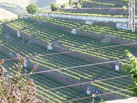 Large terraces at Quinta do Noval.