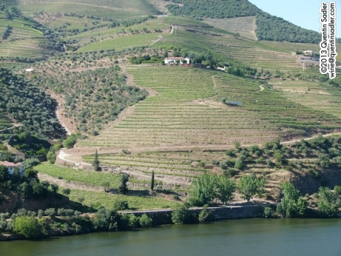 Terraced vineyards in the beautiful Douro Valley.