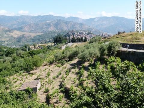 Castiglione di Sicilia from afar with vineyards in the foreground.