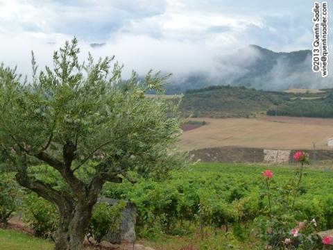 Tierra Estella.