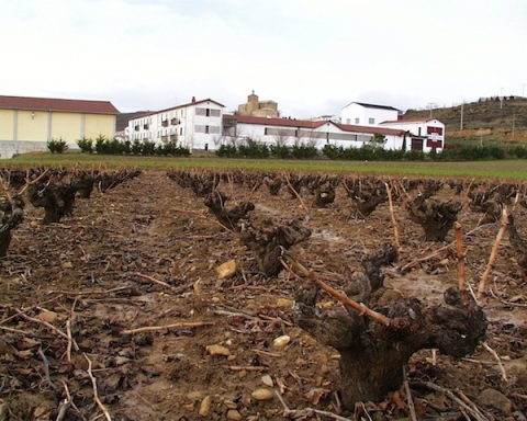 Old vines with Bodegas Palacio de Sada behind.