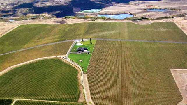Evergreen Vineyard from the air - photo from Milbrandt Vineyards.