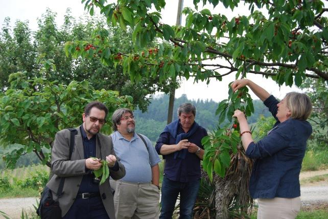 Our little group enjoying the cherries - photo courtesy of Paul Balke.