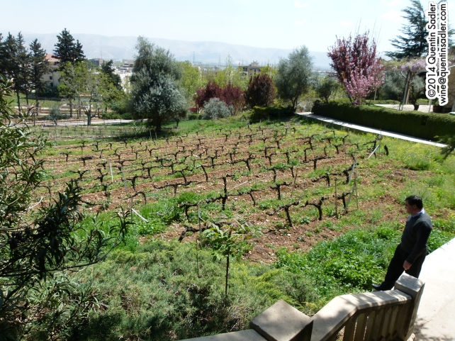 Vineyards at Château Ksara, that is the winemaker Jack Plage.