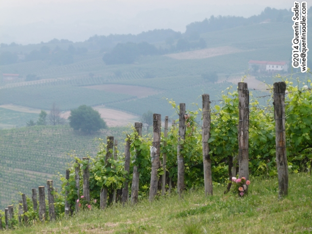 Marenco's Scarpona vineyard.