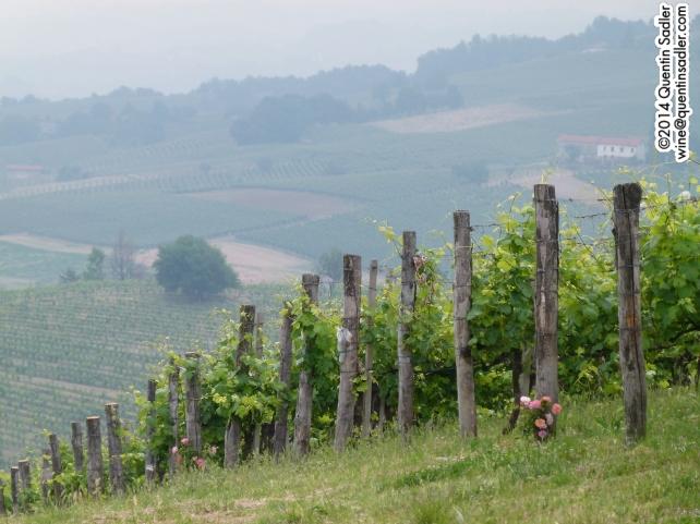 Marenco's Scarpona vineyard.