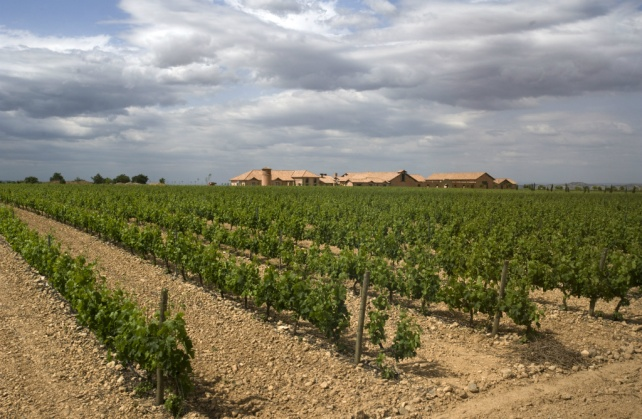 Beautifully tended vineyards at Viña Magaña. Photo from Olé Imports.