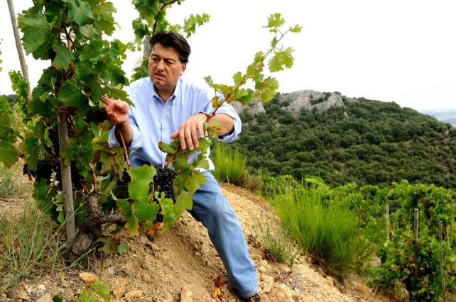 Lean-Luc Colombo in the vineyard.