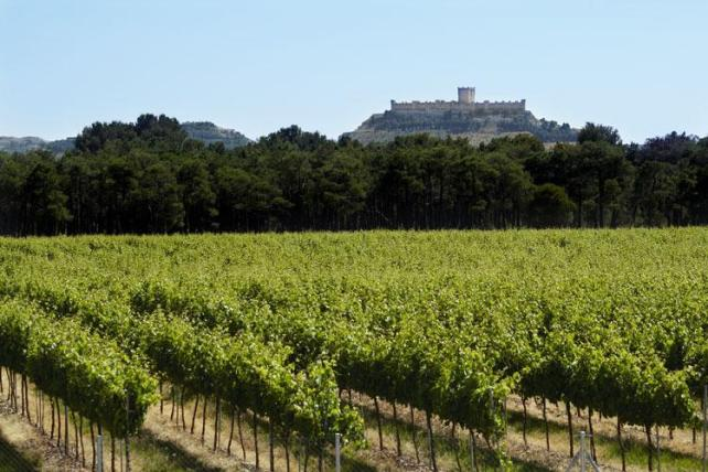 Legaris vineyards in Ribera del Duero.