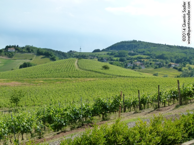 The beautiful vineyards at