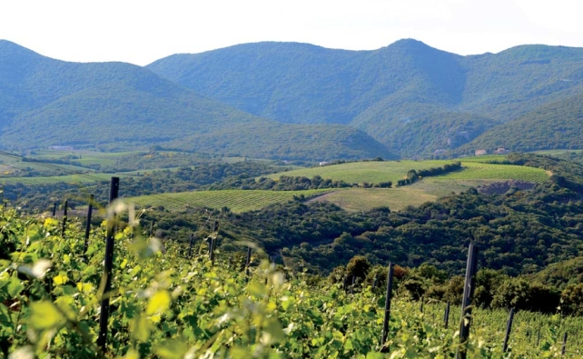 The rugged, but beautiful terrain of Faugères.