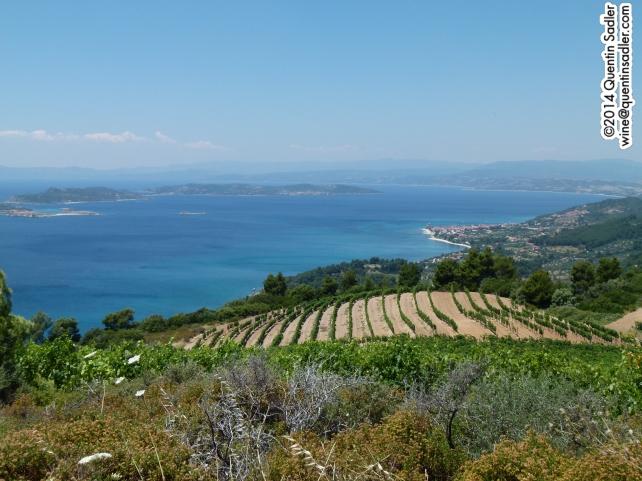 Some of Tsantali's beautiful vineyards.