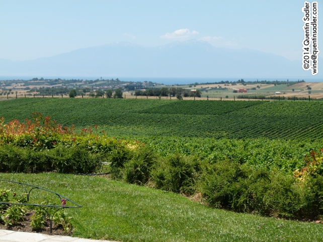 Vineyards in northern Greece with Mount Olympus in the background across the water.