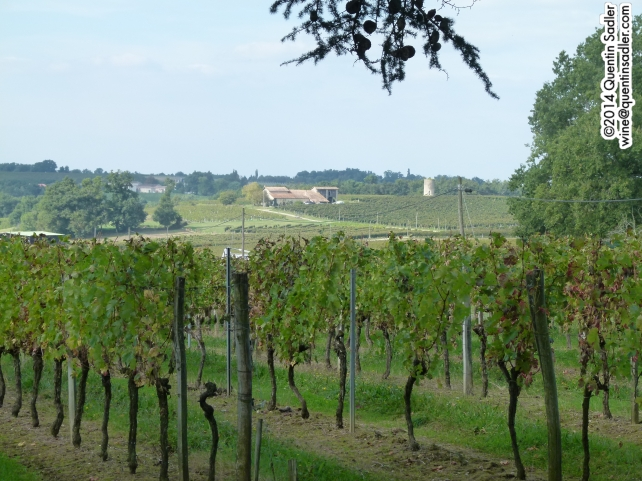 Vineyards in Entre-Deux-Mers.