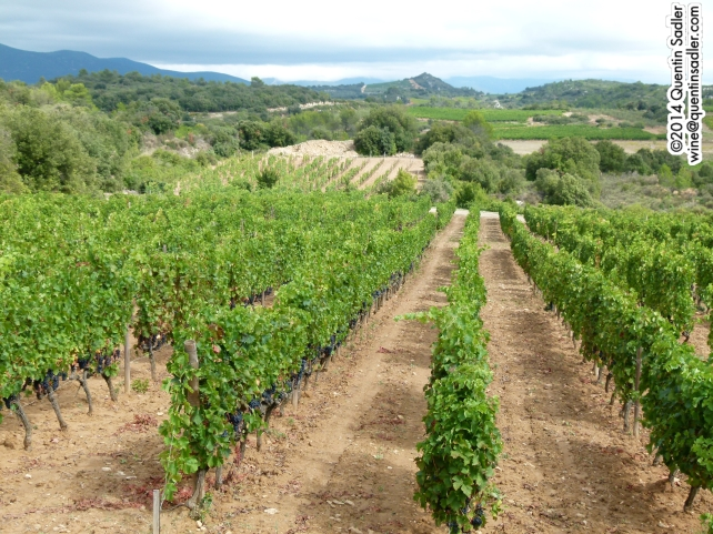 Vineyards near Béziers.
