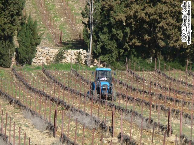 Fabrice tending his Chardonnay vines.
