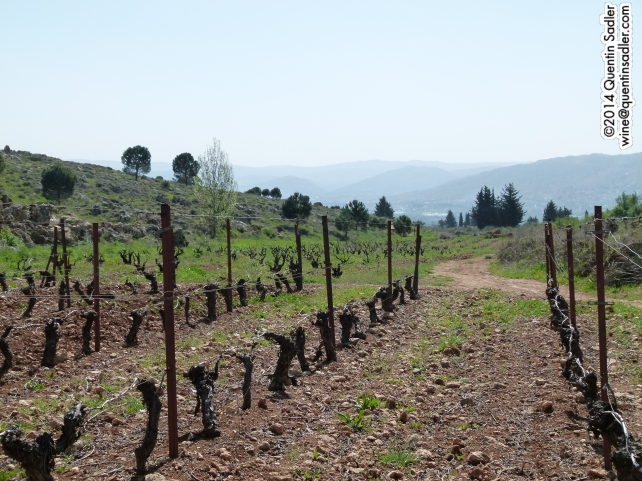 Kefraya's vineyards.