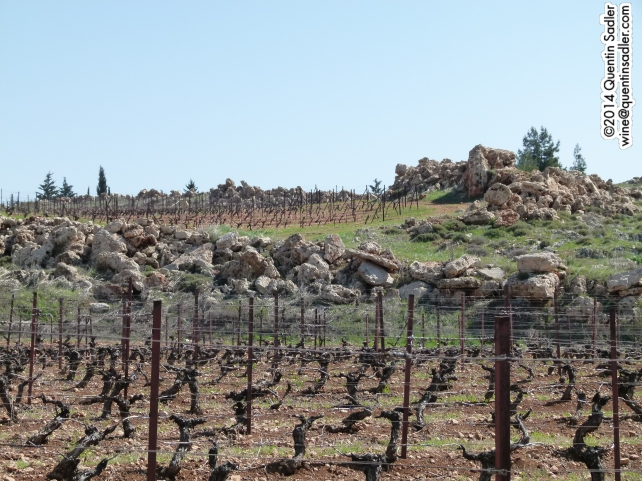The rocks that were removed before the vines could be planted.