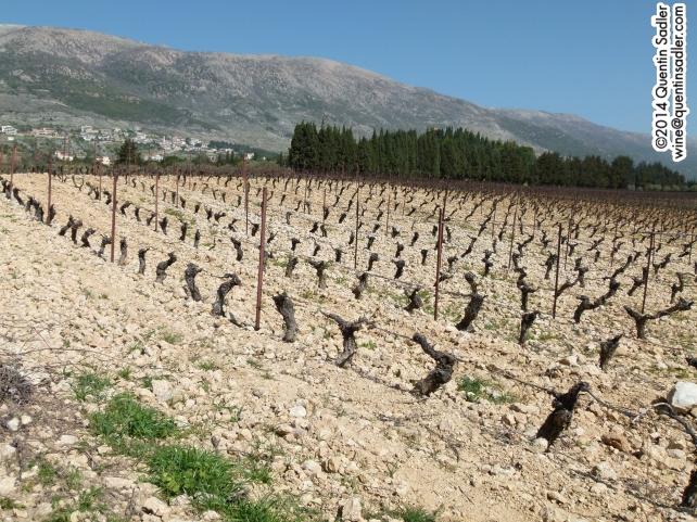 Château Kefraya's soils.