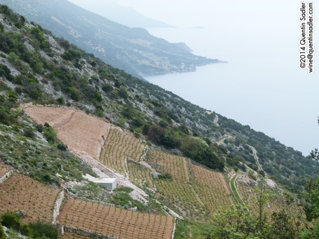 The vineyards of Dingač sweeping down to the sea on the Pelješac Peninsula.