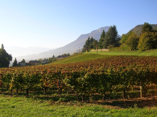 Jura vineyards showing the dramatic terrain.