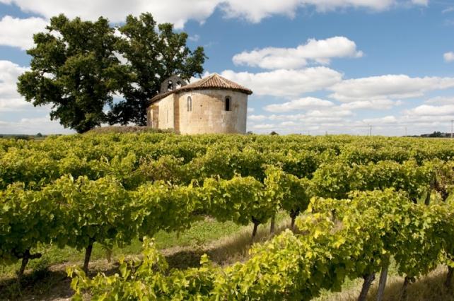 Vineyards in Saint Mont.