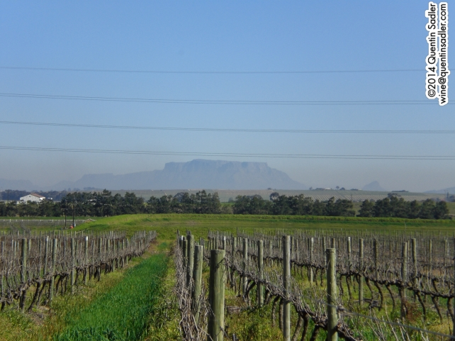 Stellenbosch vineyard with Table Mountain in the distance.