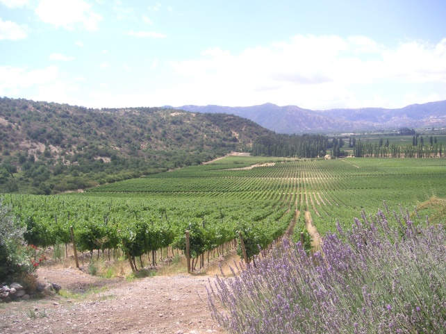 Maule Valley Vineyards.