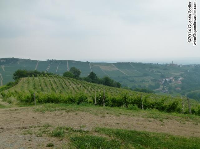Moscato vines growing on Piemonte's rolling hills.