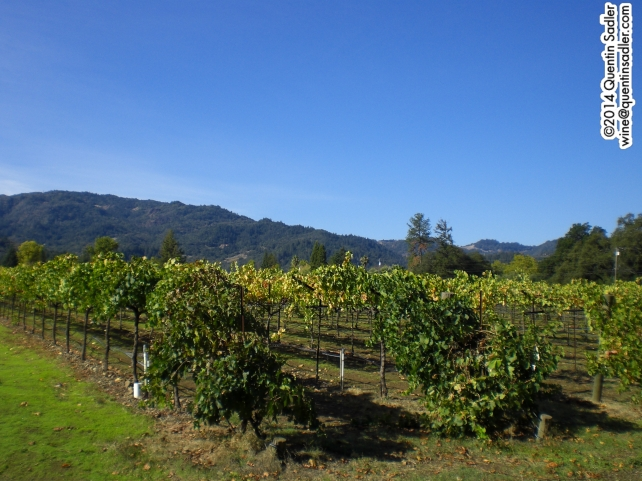 Napa Valley - looking West from St helena towards the Mayacamas.