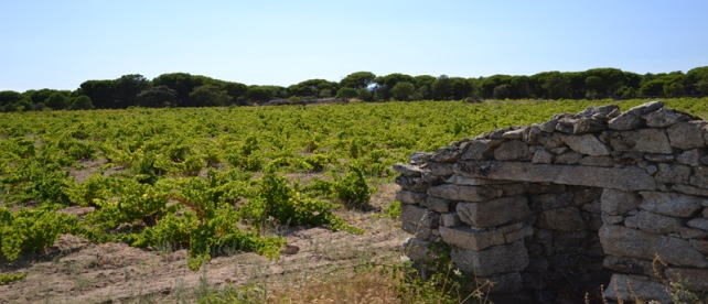 Vineyards at Viñedos de San Martin.