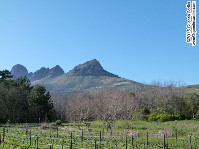 Vineyards in Stellenbosch, near False Bay.