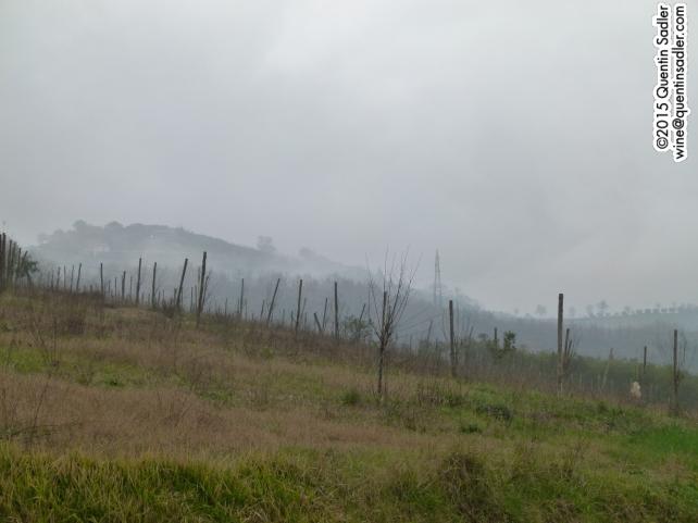 Vineyards in Benevento.