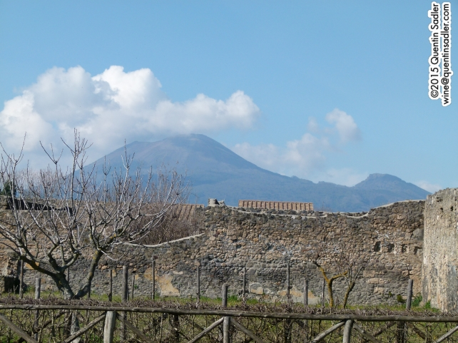One of the Mastroberardino vineyards in Pompeii with Vesuvius in the background. Mount Vesuvius erupted in AD 79 destroying the city and killing everyone within it.