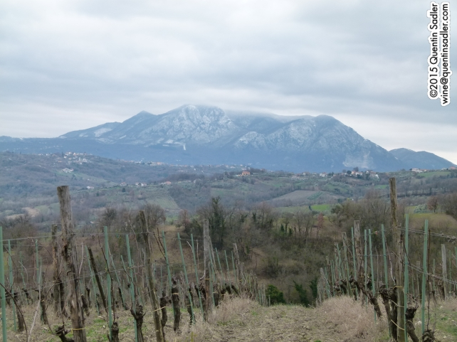 Vineyards in Lapio.