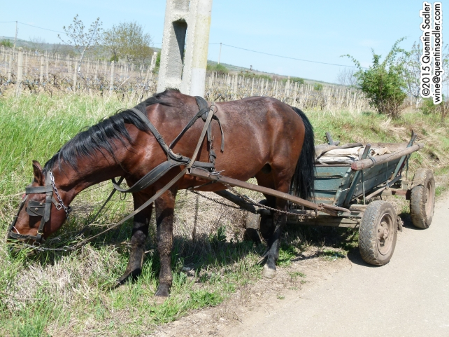 Typical transport in the countryside.
