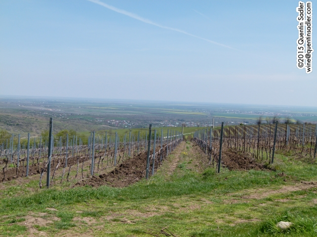 Vineyards at SERVE.